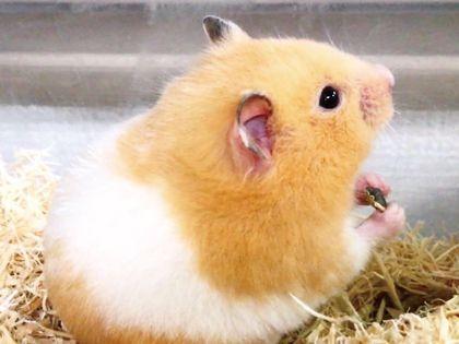 ペット総合科 ペットアドバイザーコース 小動物を学ぼう!! のイメージ