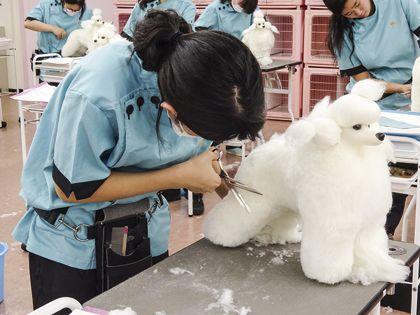 ペット総合科 トリマーコース ドッグマネキンのカット実習体験 のイメージ
