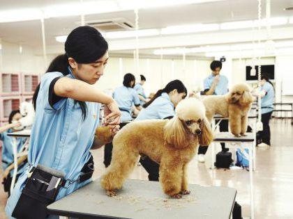 ペット総合科 トリマーコース ワンちゃんの美容体験 のイメージ