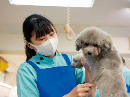 【来校型】ペット総合科&動物看護科 ハロウィンスペシャルブース体験 のイメージ
