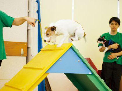 【来校型】ペット総合科 ドッグトレーナーコース スポーツの季節、到来!わんわん運動会 のイメージ