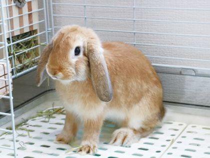 【来校型】動物看護科 小動物のケージレイアウト のイメージ