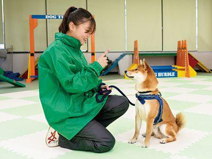 【来校型】ペット総合科 ドッグトレーナーコース ワンちゃんのしつけ体験 のイメージ