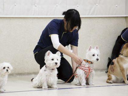 ペット総合科&動物看護科 ペットのおしごとを知ろう! のイメージ