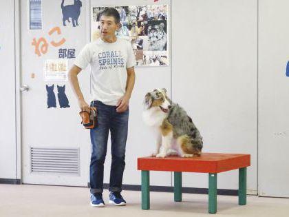 ペット総合科 ドッグトレーナーコース ドッグトレーナー体験【小泉先生】~アジリティ体験~ のイメージ
