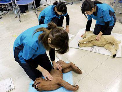 【来校型】動物看護科 動物の救急救命 のイメージ