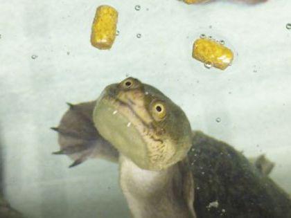 ペット総合科 ペットアドバイザーコース 水生生物を学ぼう!!【細川先生】 のイメージ
