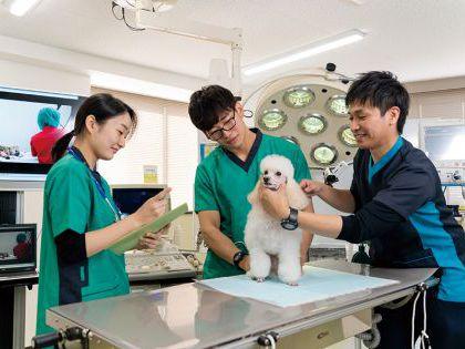 【来校型】ペット総合科&動物看護科 犬体チェック!!&ベーシックケア のイメージ