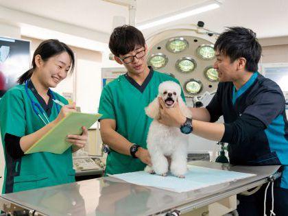 【来校型】ペット総合科 ドッグトレーナーコース 犬種クイズ! のイメージ