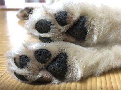 ペット総合科&動物看護科 パッドクリーム作り体験 のイメージ