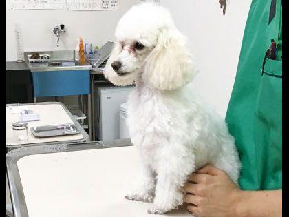 【来校型】動物看護科 動物看護師のお仕事~血液検査をやってみよう!~ のイメージ