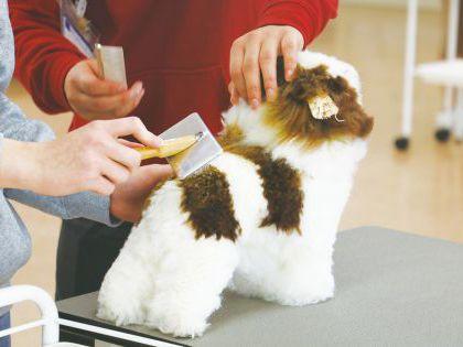 【来校型】ペット総合科 トリマーコース ドッグマネキンのカット実習体験 のイメージ