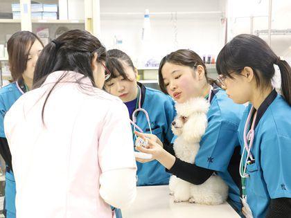 ペット総合科&動物看護科 ペットのお仕事を知ろう!(※動物看護科の体験対象者は新高校3年生&2年生) のイメージ