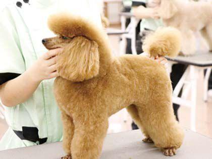 動物看護科 動物看護師のおしごと~ペットのデンタルケア~ のイメージ