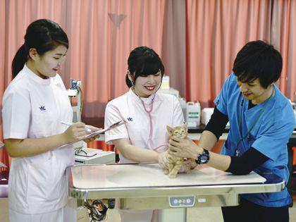 動物看護科 動物看護師のおしごと! ~血液検査をやってみよう!~ のイメージ