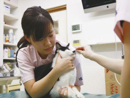 動物看護科 動物看護師のお仕事 ワンちゃん・ネコちゃんを保定してみよう のイメージ