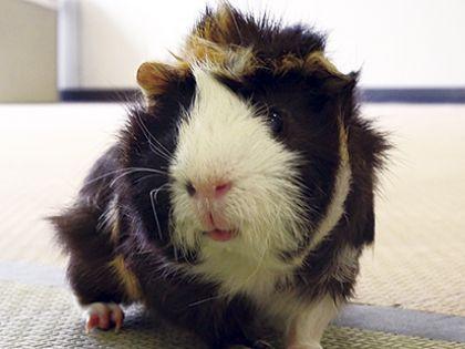 ペット総合科&動物看護科 小動物の飼育体験授業 のイメージ
