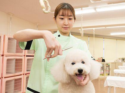 【来校型】ペット総合科 トリマーコース ワンちゃんの美容体験 のイメージ