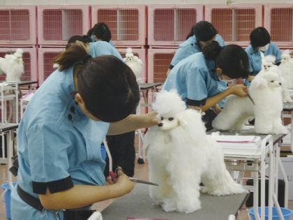 ペット総合科 ドッグマネキンのカット実習体験 のイメージ