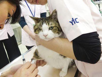 動物看護科 動物看護師のおしごと 血液検査をしてみよう! のイメージ
