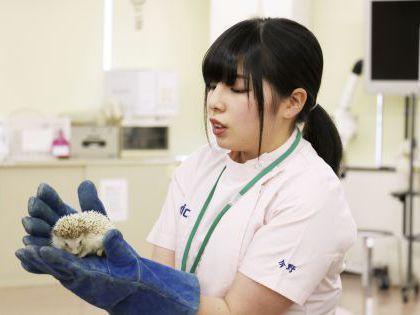 動物看護科 動物看護師のおしごと!~小動物の扱い方を学ぼう のイメージ