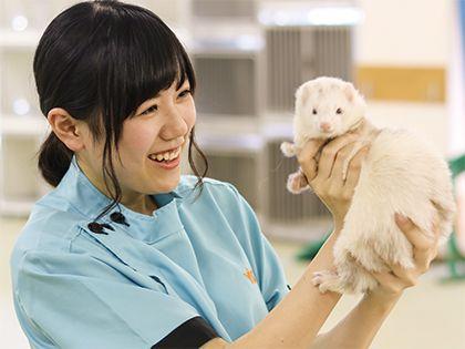 動物看護科 動物看護師のお仕事 小動物の保定法と投薬体験 のイメージ