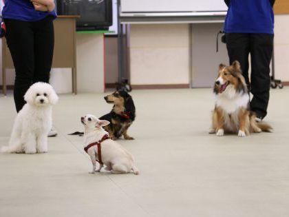 ペット総合科 ドッグトレーナーによるデモンストレーション のイメージ