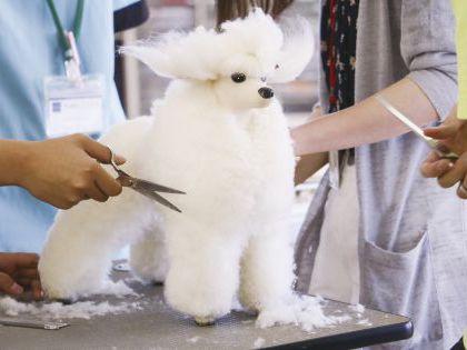 ペット総合科 トリマーコース ドッグマネキンカット実習体験 のイメージ