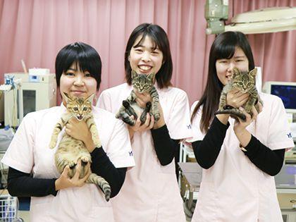 動物看護科 YIC京都★オリジナルカリキュラム のイメージ