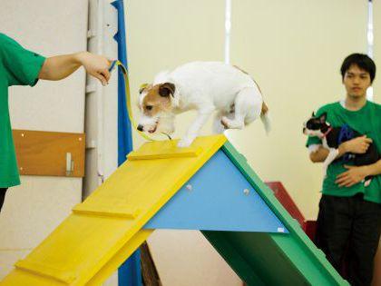 ペット総合科 ドッグトレーナー体験~アジリティ体験~ のイメージ