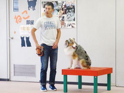 ペット総合科 ドッグトレーナーコース ワンちゃんのしつけ体験 のイメージ