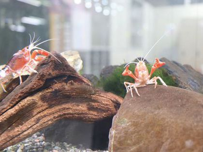 ペット総合科 ペットアドバイザーコース 水生生物を学ぼう!! 【細川先生】 のイメージ