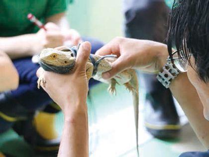 ペット総合科 ペットアドバイザーコース 爬虫類学を学ぼう のイメージ