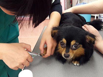 ペット総合科&動物看護科 犬体チェック&ベーシックケア(※動物看護科の体験対象者は新高校3年生&2年生) のイメージ