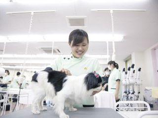 動物看護科 犬体チェック+爪切り体験 のイメージ