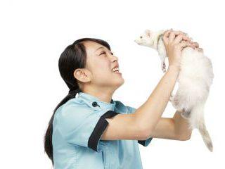 動物看護科 小動物の飼育体験授業 のイメージ