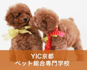 YIC京都ペット総合専門学校